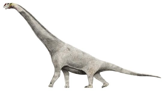 Will the Real Brachiosaurus Please Stand Up?