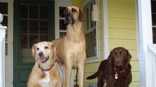 Do Dogs Know They're Being Photographed?