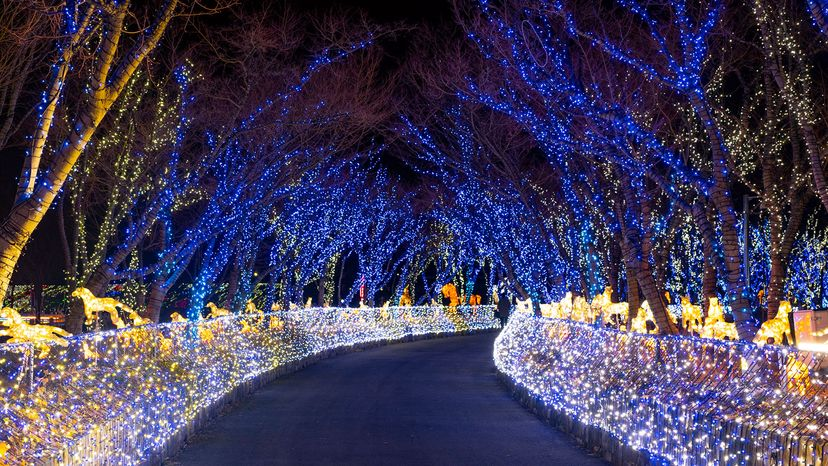 Multicolored LED lights