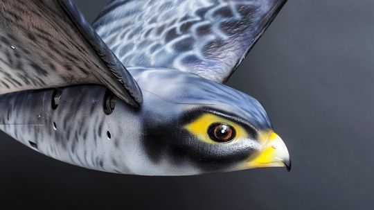 A First for Airports: Flapping Robo-falcon to Scare Away Birds