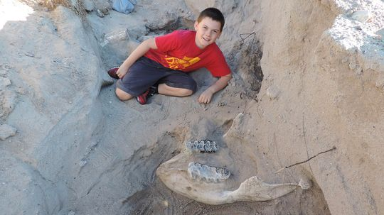 Boy Literally Stumbles Across Million-year-old Fossils During New Mexico Hike