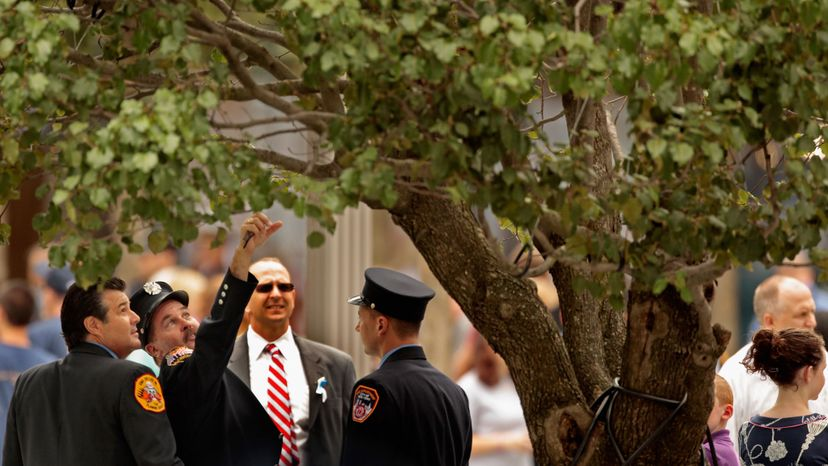 New York Fire Department firefighters look at the 9/11 Survivor Tree at the 9/11 Memorial Plaza during the 10th anniversary ceremonies of the Sept. 11, 2001 terrorist attacks at the World Trade Center site, in 2011 in New York City.  Chip Somodevilla/Getty Images