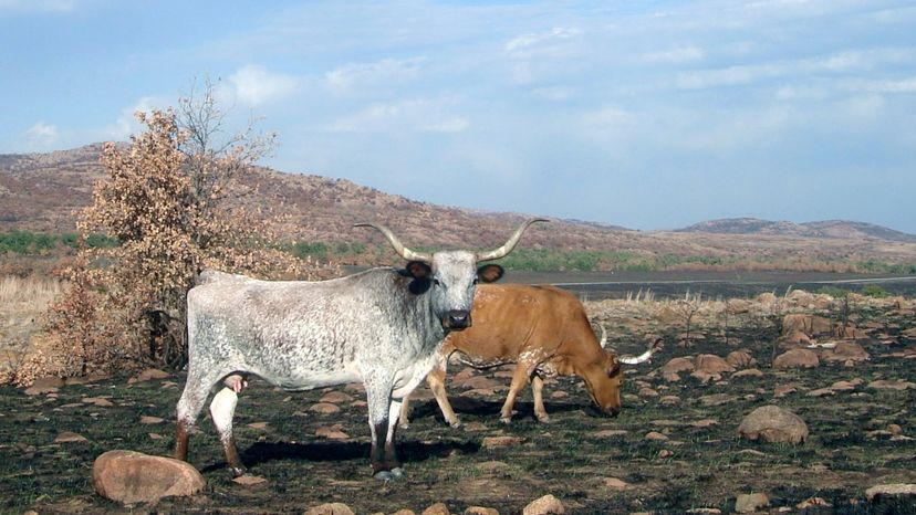 Oklahoma's Wichita Mountains Wildlife Refuge