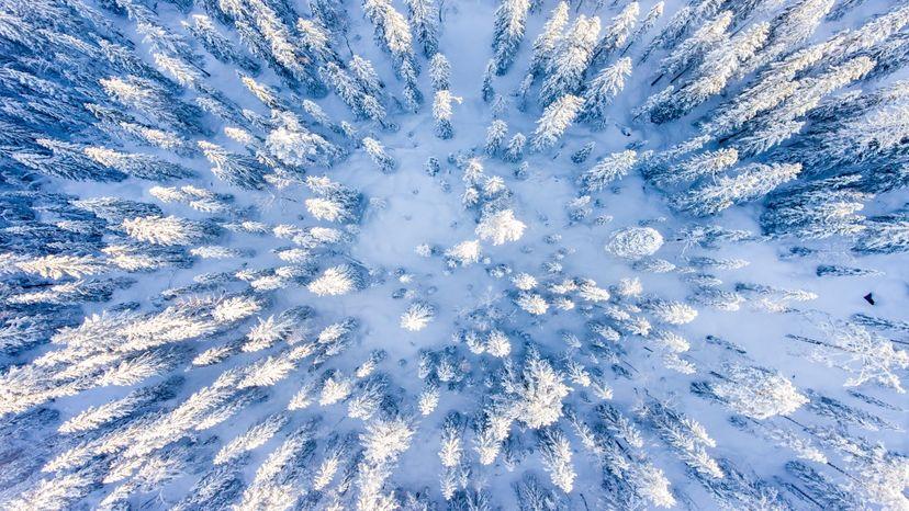 Bird's eye view of snowy trees