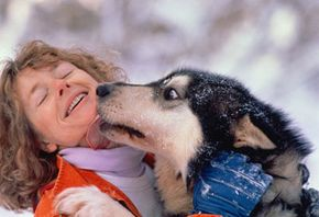 Mushers have close relationships with their dogs, and often put their needs before their own.
