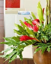 Houseplants help bring the outdoors in and breathe life into a space.