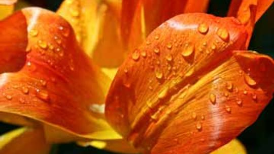 What is macro nature photography?