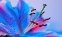 Floral subjects are very popular in macro photography because the tight focus offers a unique perspective on tiny details.
