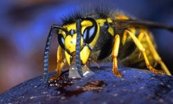 Macro shots like this one give us glimpses of aspects of our world we almost never get to see with the naked eye.