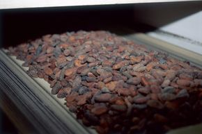 Roasting cocoa beans in your oven isn't an exact science, but it works fine in a pinch.