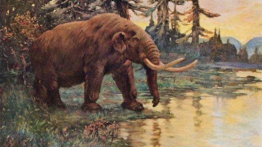 The Mastodon Boneyard That Stole Thomas Jefferson's Heart