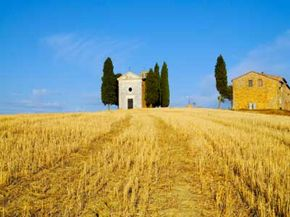 Durum wheat grows naturally in Italy.