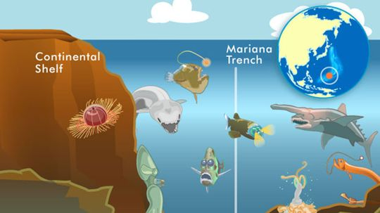 10 Weird Creatures From the Mariana Trench