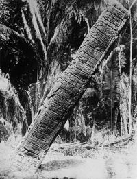 A Mayan calendar column was found in Quirigua, Yucatan peninsula, Mexico, on August 13, 1929.