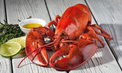 With a little planning, it's still possible to cook and eat your favorite foods, such as lobster, without breaking the bank.