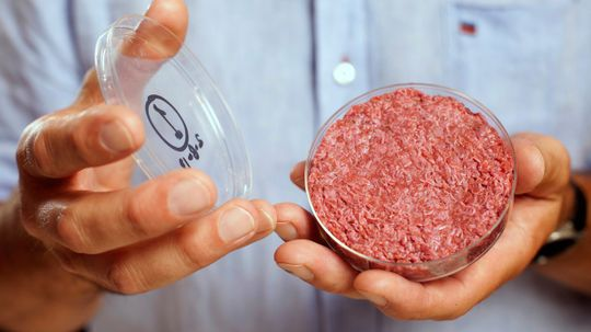 Could you grow meat from stem cells?