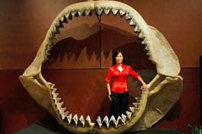 This 11-by-8.75-foot (3.35-by-2.67-meter) resin model of a set of megalodon jaws, including 184 fossilized teeth up to 7 inches (17.8 centimeters) in length, was put up for auction in 2009 with an estimated value of $900,000-1,200,000 [source: Bonhams].
