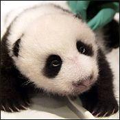 Meet Tai Shan