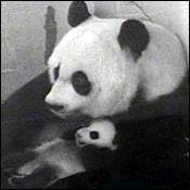 Tai Shan on September 1, 2005.