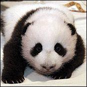 Tai Shan on September 19, 2005.