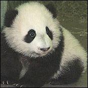 Tai Shan on November 11, 2005.