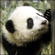 Tai Shan on November 29, 2005.