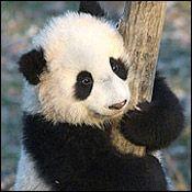 Tai Shan on December 22, 2005.