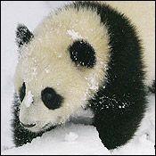 Tai Shan on February 12, 2006.