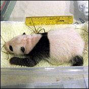 Tai Shan on August 2, 2005.