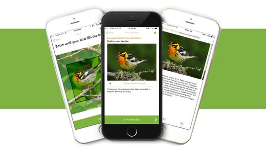 What Kind of Bird Is That? The Merlin Bird ID App Can Tell You