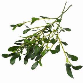 """The word """"Mistletoe"""" is derived from the Old English words, """"mistel"""" (dung) and """"tan"""" (twig). The plant is thought to be named after bird droppings on a branch. See pictures of Christmas trees."""