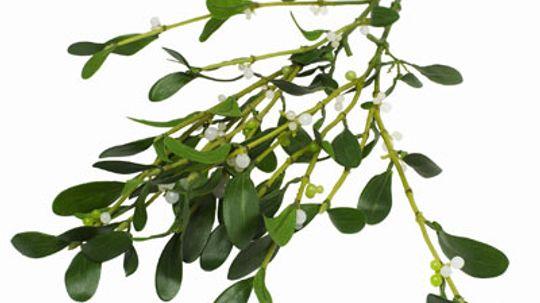 How Mistletoe Works