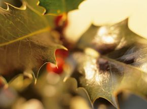 Mistletoe myths abound in ancient cultures.