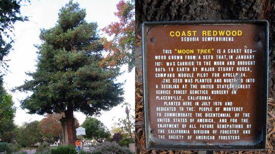 """美国宇航局的月球树仍然是阿波罗14号的见证""""border="""