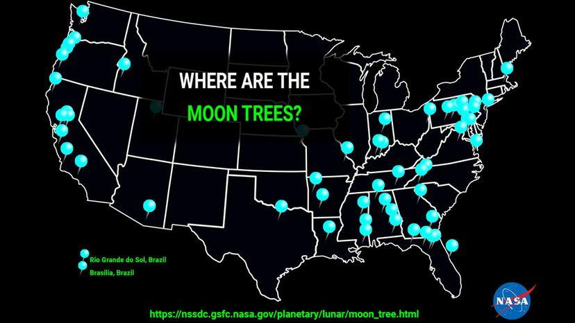 moon tree map