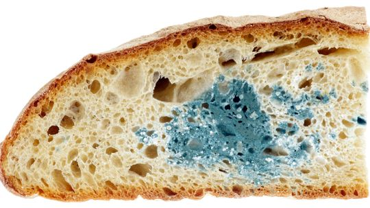 Is moldy food safe to eat?