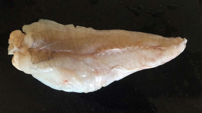 monkfish tail filet