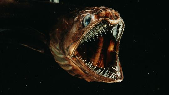 10 Animals That Look Like Monsters