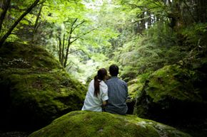 You'll find lots of moss in lush, shady areas.