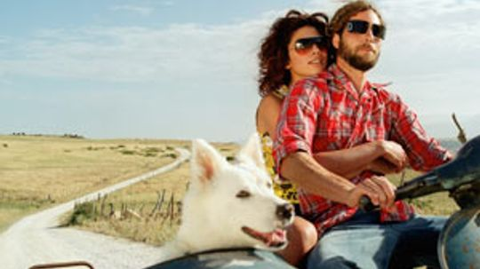 Motorcycle Pet Traveling Guide