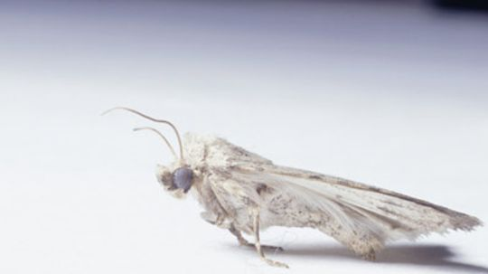 What is in moth balls? Is it harmful to people?
