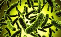 Beware bacteria!