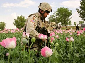 In 2006, a U.S. Army soldier wades through a poppy field in Afghanistan's Helmand province, the world capital of opium cultivation.
