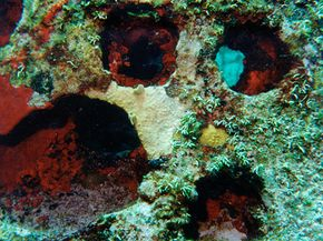 Cremains mixed with concrete form an artificial reef for marine life.