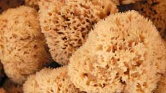 Are Natural Sea Sponges Good For Your Skin?