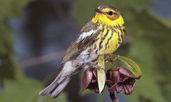 A pair of binoculars can help you get a closer look at the bird building a nest in your backyard.