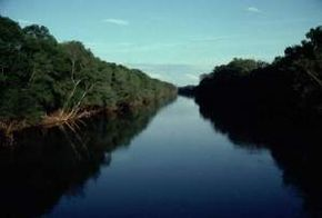Protecting the Roanoke River floodplain is a major project of the N.C. Conservancy chapter.