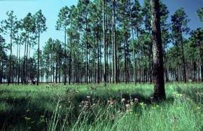 The Green Swamp Preserve is North Carolina's largest preserve and boasts many rare plants and animals.