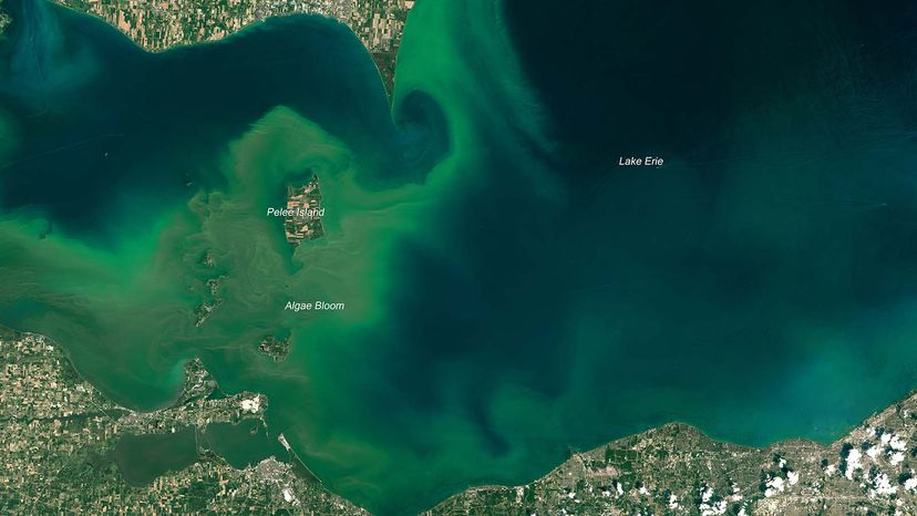 algal bloom Lake Erie
