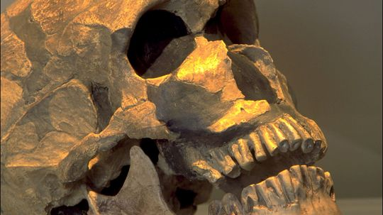 Toddler Skeleton Indicates Neanderthals Buried Their Dead